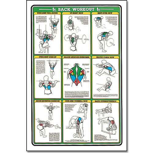 Fitnus Chart -Back Workout 23 quot x35 quot Upper Back Workout Chart For Men